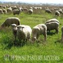 Picture of All Purpose Pasture Mixture
