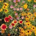 Picture for category Perennials
