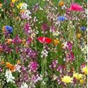 Picture for category Wildflowers