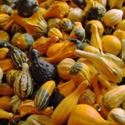 Picture for category Gourds