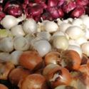 Picture for category Onions