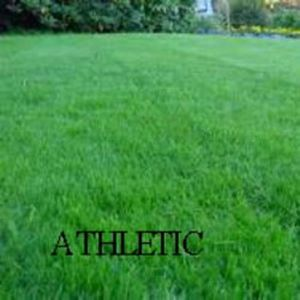 Picture of  Athletic Lawn Mixture