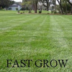 Picture of Fast Grow Lawn Mixture