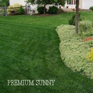 Picture of Premium Sunny Lawn Mixture
