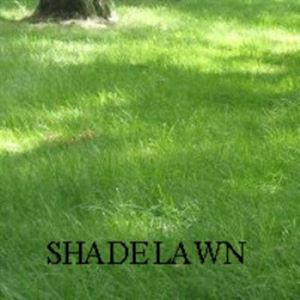 Picture of Shade Lawn Mixture