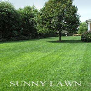 Picture of Sunny Lawn Mixture