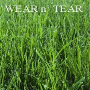 Picture of Wear n' Tear Lawn Mixture