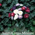 Picture of Aster, Crego Mix