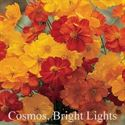 Picture of Cosmos, Bright Lights