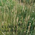 Picture of Timothy, Climax