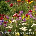 Picture of Wildflowers, Midwestern Mixture