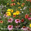 Picture of Wildflowers, Perennial Mixture