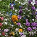 Picture of Wildflowers, Shade Mixture