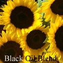 Picture of Sunflower, Black Oil