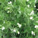 Picture of Field Peas, Austrian Winter