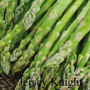 Picture of Asparagus, Jersey Knight 2 Year Roots