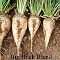 Picture of Buck Blend Sugar Beet