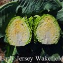 Picture of Cabbage, Early Jersey Wakefield