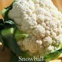Picture of Cauliflower, Snowball