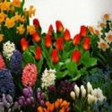 Picture for category Fall Bulbs
