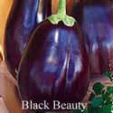 Picture of Eggplant, Black Beauty
