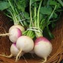 Picture for category Turnips