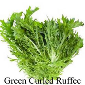 Picture of Endive, Green Curled Ruffec