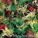 Picture of Lettuce, Mesclun Mixture