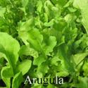 Picture of Greens, Rocket Arugula