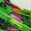 Picture of Swiss Chard, Rainbow