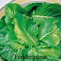 Picture of Mustard, Tendergreen