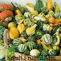 Picture of Gourds, Small Fruited Mixture