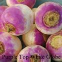 Picture of Turnip, Purple Top White Globe
