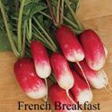 Picture of Radish, French Breakfast