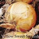 Picture of Onion, Yellow Sweet Spanish