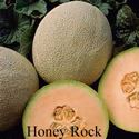 Picture of Cantaloupe, Honey Rock