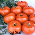 Picture of Tomato, Jet Star Hybrid