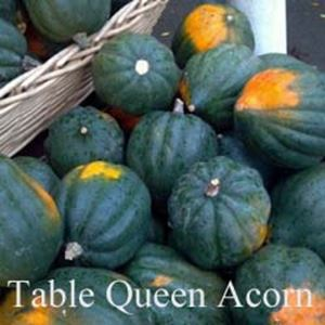Squash table queen acorn debruyn seed store for Table queen squash