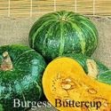 Picture of Squash, Burgess Buttercup
