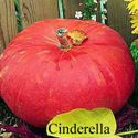 Picture of Pumpkin, Cinderella