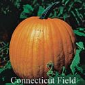 Picture of Pumpkin, Connecticut Field