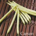 Picture of Bush Beans, Carson Yellow