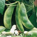 Picture of Lima Bean, Fordhook 242