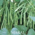 Picture of Bush Bean, Masai French Filet