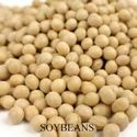 Picture of Shell Bean, Edible Soybeans