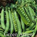 Picture of Shell Peas, Green Arrow