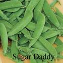 Picture of Snap Peas, Sugar Daddy