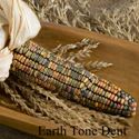 Picture of Decorative Corn, Earth Tones Dent