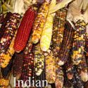 Picture of Decorative Corn, Indian