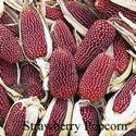 Picture of Decorative Corn, Strawberry Popcorn